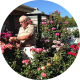Dr Ralph Slaughter in the garden with his roses