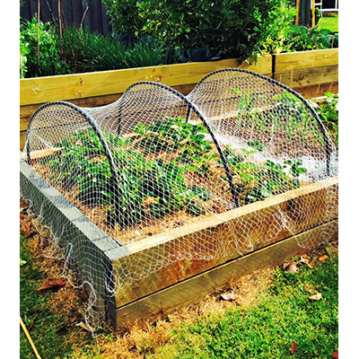 Grow your own - a source of food