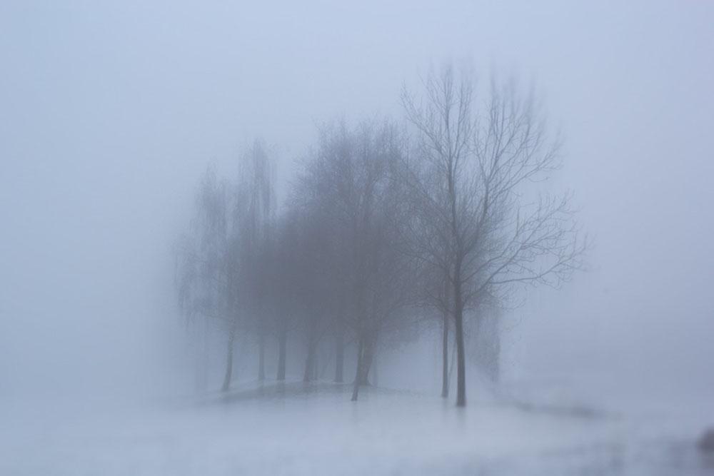 Allisdhair McNaull's photograph - Against a blank canvas