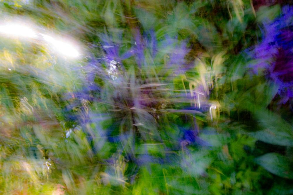 Allisdhair-McNaull's photograph Angel of-Light