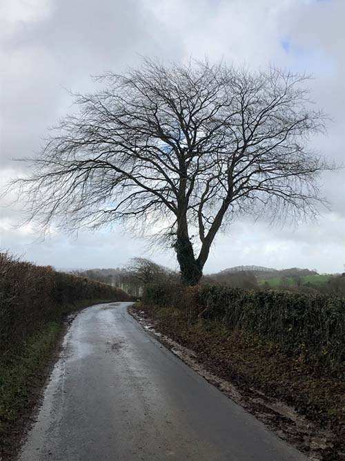 Caroline Roach's photograph of a winding country road with tree