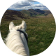Lisa Catherine Phipps photograph of a white horse looking at a landscape