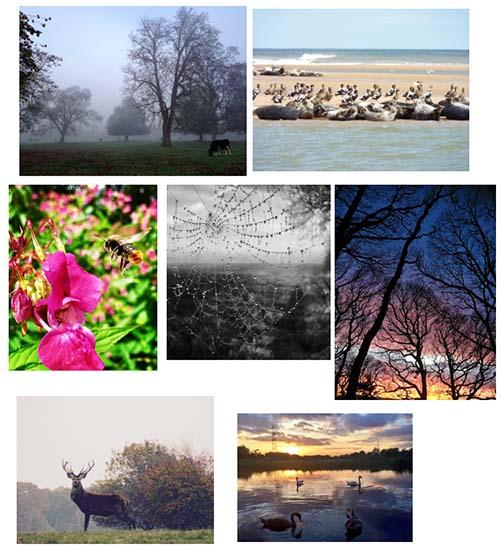 Rachel Lowton's nature photographs
